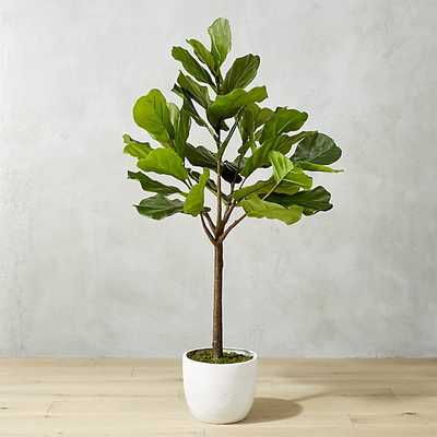 "potted 65"" fiddle leaf fig - CB2"