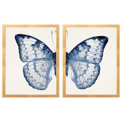 SPLIT BLUE BUTTERFLY B - Caitlin Wilson
