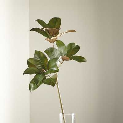 Magnolia Stem - Crate and Barrel