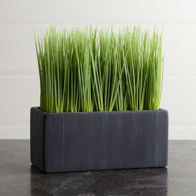 Large Potted Grass - Crate and Barrel
