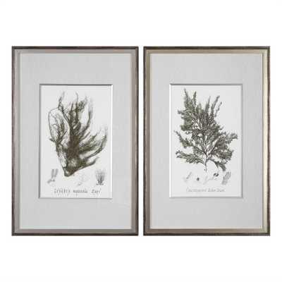 Sepia Seaweed, S/2 Framed Art - Hudsonhill Foundry