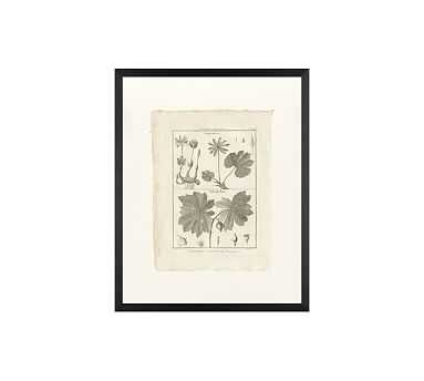 "Botanical Plate 449, 16 x 20"", Wood Gallery, Black, No Mat - Pottery Barn"