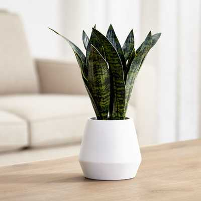 Artificial Snake Plant in Pot - Crate and Barrel