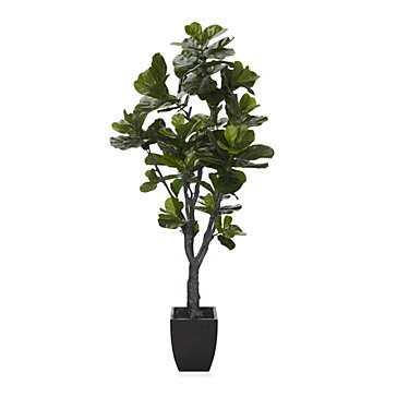 Fiddle Leaf Fig Tree - Z Gallerie
