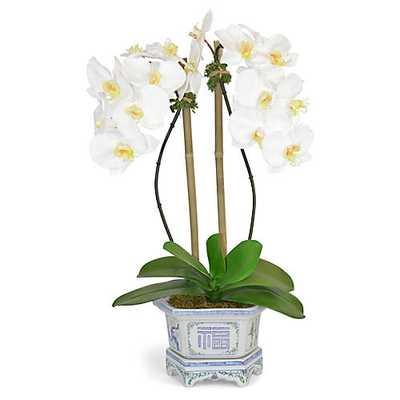 "26"" Phalaenopsis Orchid Arrangement, Faux - One Kings Lane"