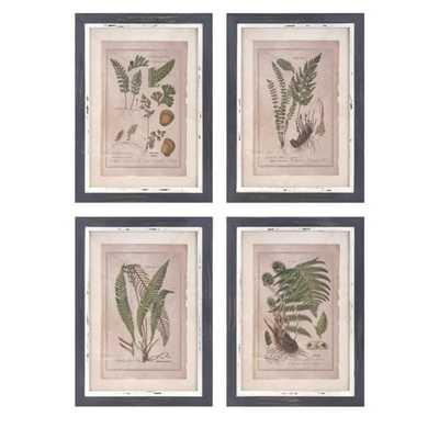 Botanical Print Wall Decor - Ast 4 - Mercer Collection