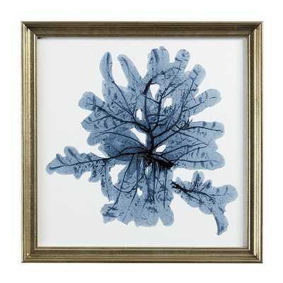 Ballard Designs Petite Blue Seaweed Art - Print 3 - Ballard Designs