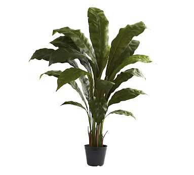 Faux Potted Birds Nest Plant - Pottery Barn