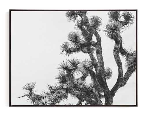 Joshua Tree In September Art Print - Minted