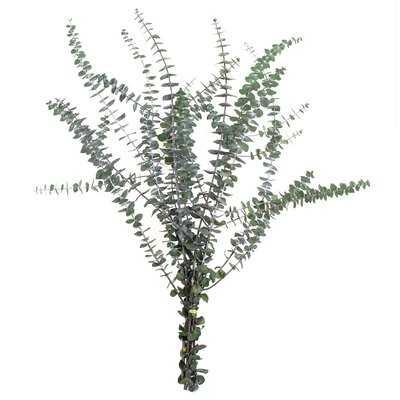 "30'' Preserved Eucalyptus Branch (bunch) - Green - 30"" - Wayfair"