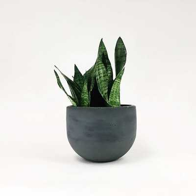"SETTLEWELL Concrete Bowl Planter, 9"", Dark Gray - West Elm"
