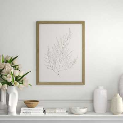 Paragon Gold Foil Algae II by Goldberger - Picture Frame Graphic Art Print on Paper - Perigold
