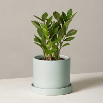 ZZ Plant in Small Hyde Planter - Mint - Brooklinen