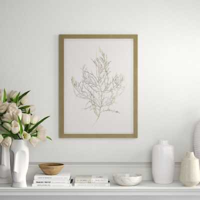 Paragon Gold Foil Algae III by Goldberger - Picture Frame Graphic Art Print on Paper - Perigold