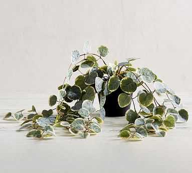 Faux Trailing Variegated String Of Hearts Houseplant - Pottery Barn