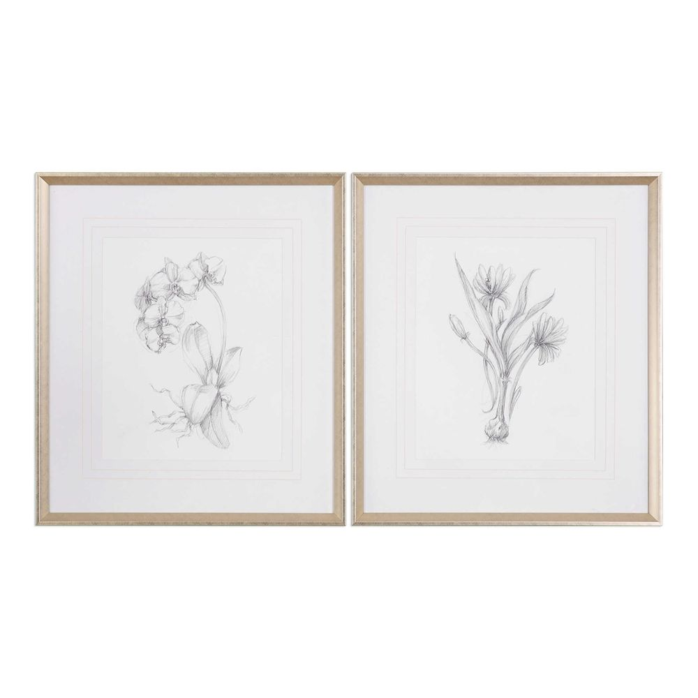 Botanical Sketches, S/2 - 28x32 - Silver/Taupe Frame-with mat