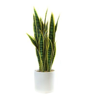 Faux Snake Plant in Planter