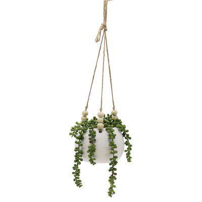 String Ivy Plant in Basket
