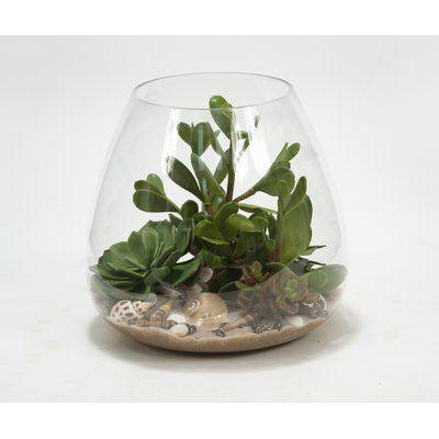 Succulents, Sand and Shells Desk Top Plant in Terrarium