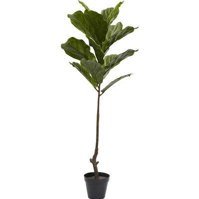 Fiddle Leaf Tree in Pot