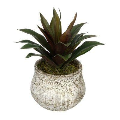 Artificial Succulent Desk Top Plant in Decorative Decorative Vase