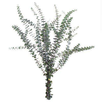 "30'' Preserved Eucalyptus Branch (bunch) - Green - 30"""