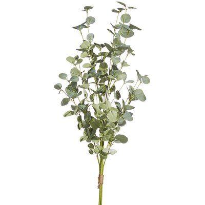 Bundle Eucalyptu Plant
